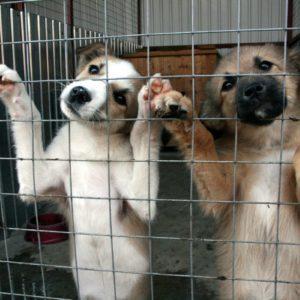 базы емаил адресов приюты для животных украина