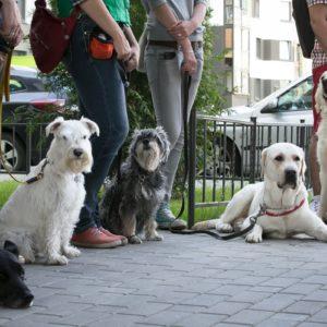 базы емаил адресов форум собаководов