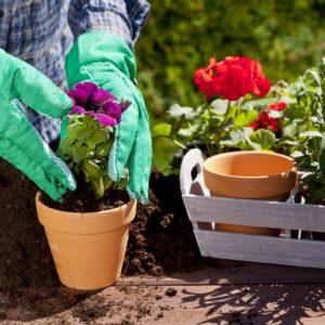 емаил адреса по запросу выращивание расстений и цветов